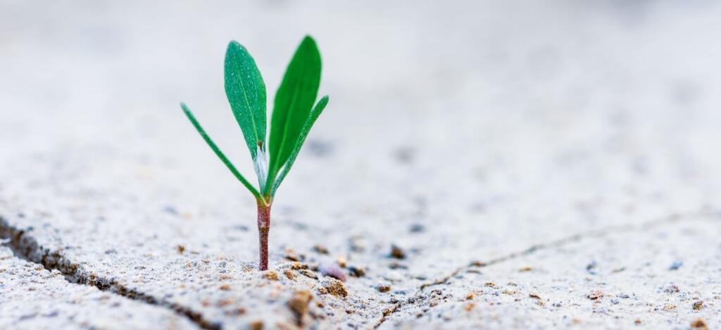 mentalità dinamica growth mindset
