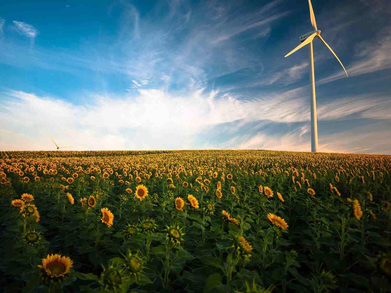 startup green in Italia